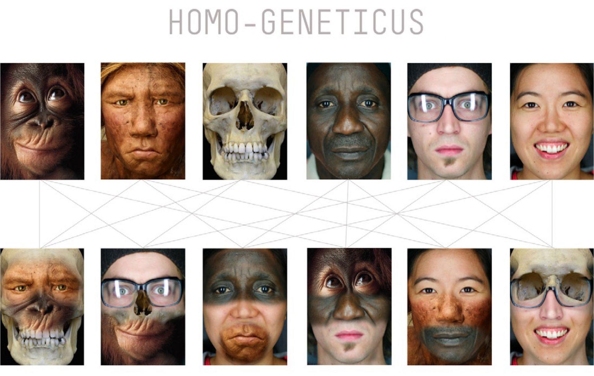 homogen1